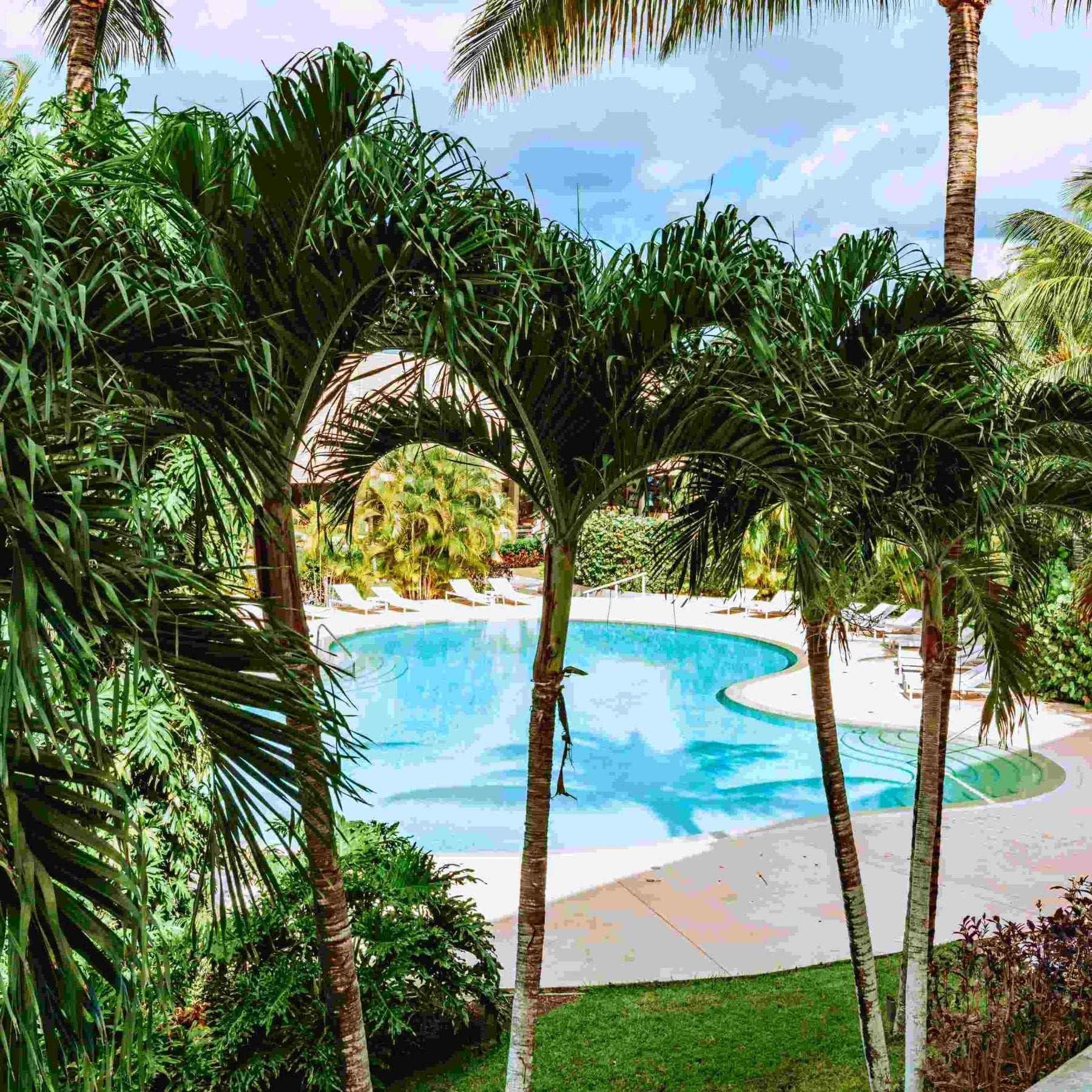 tropical resort style pool with palm trees